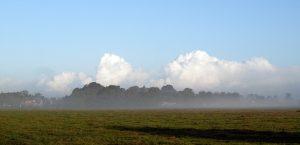 krewerd-mist